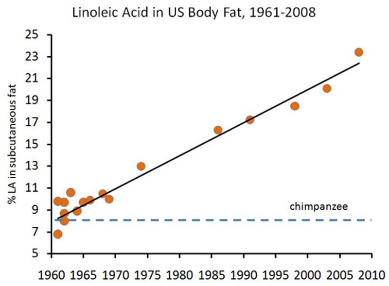 chart of linoleic acid in body fat