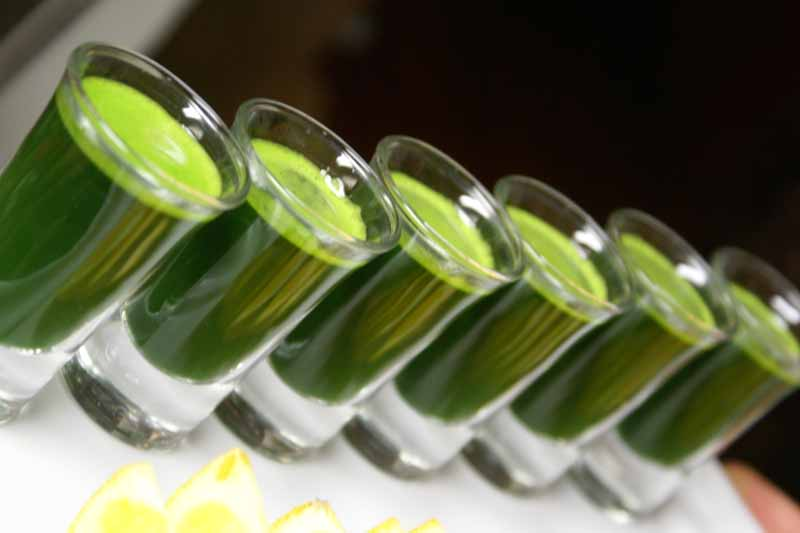 wheatgrass shots