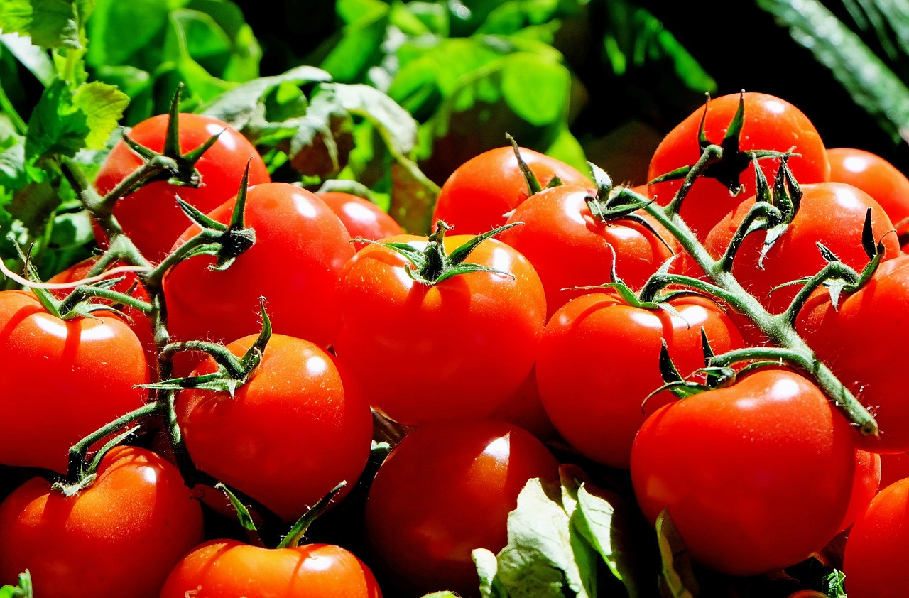 tomatoes, lycopene, beta carotene, amcoffee, am coffee, skin health, oxidative stress