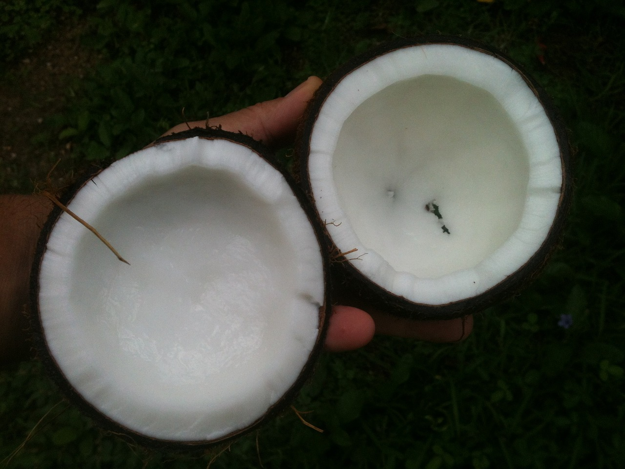 coconut oil benefits, am coffee, amcoffee, health