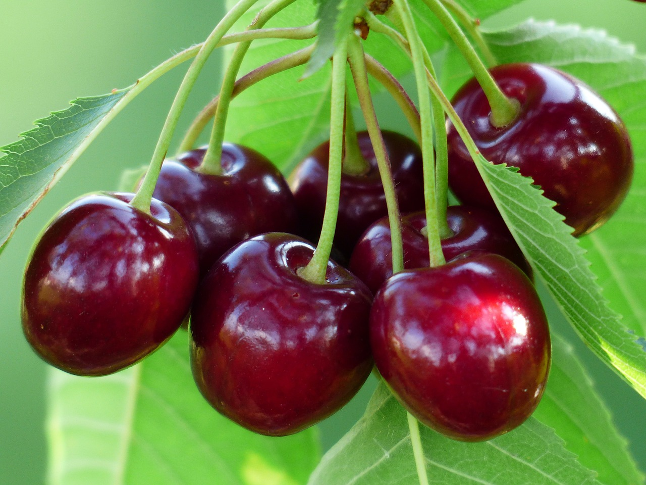 red cherries, blood sugar, am coffee, amcoffee, health, fruits