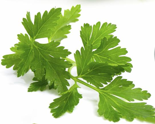 italian parsley cooking