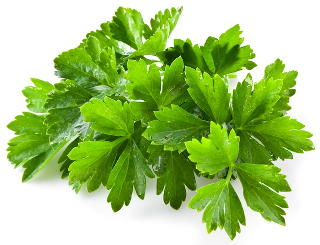 cilantro coriander cooking benefits